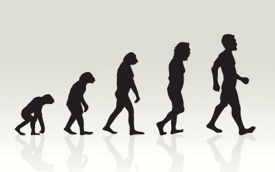 Evolution vs Implementation